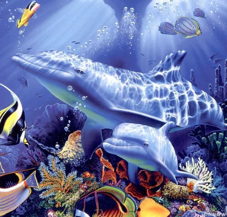 dolphin wallpaper desktop dolphin wallpaper desktop 865785001 jpg 730x700