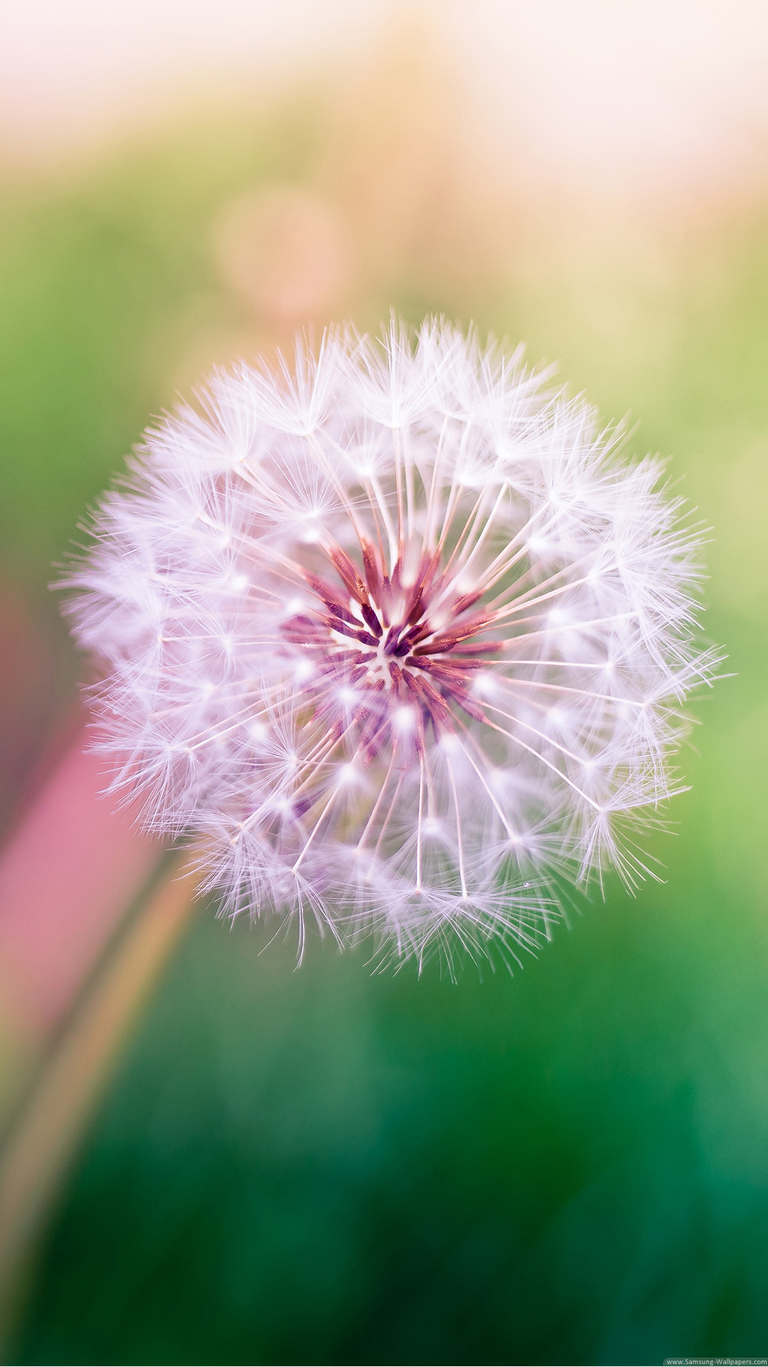 Dandelion Lock Screen 1080x1920 Samsung Galaxy Note 3 Wallpaper HD ...