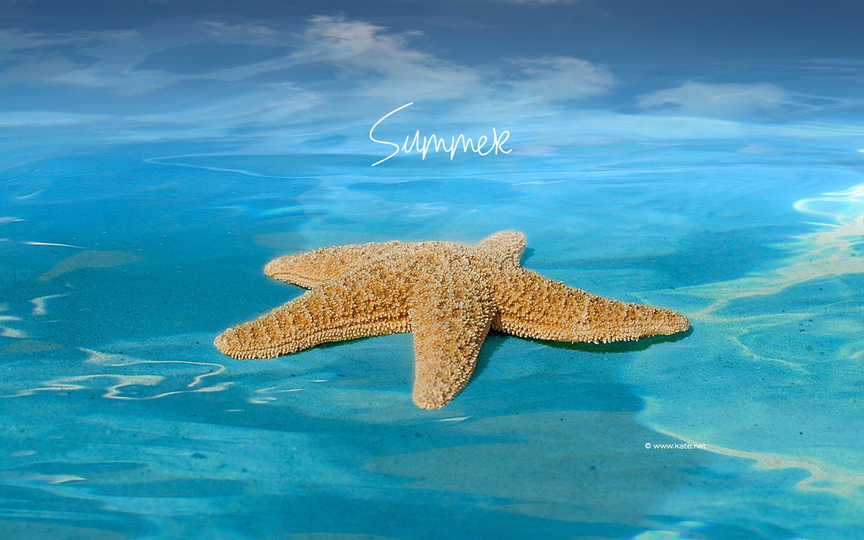 starfish wallpaper photos wallpaper kate net created 5 31 09 1440x900