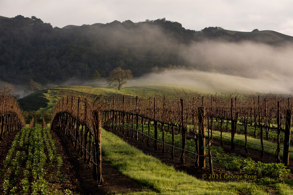 Vinography Images Sonoma Fog   Vinography A Wine Blog 600x399