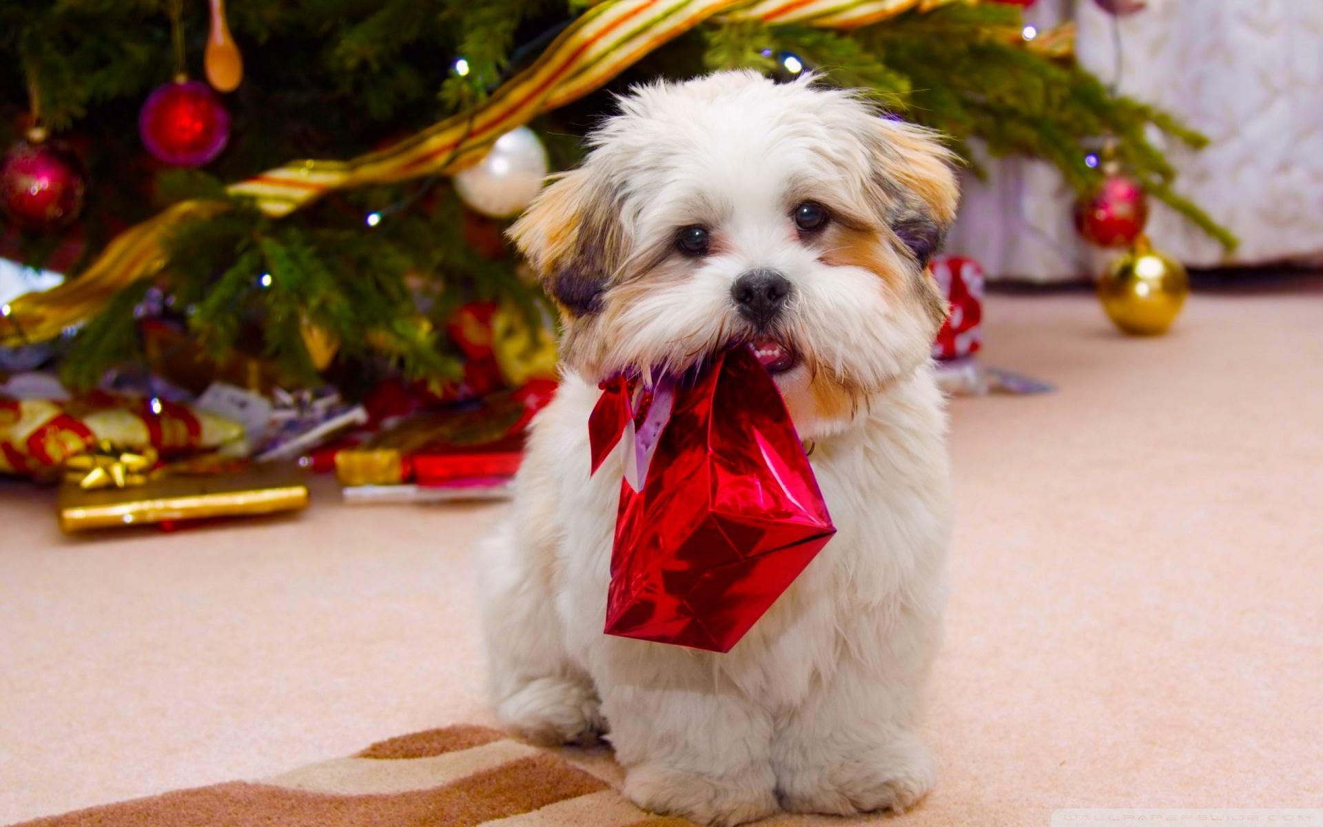 cute dog christmas wallpapers HD Desktop Wallpapers 1920x1200