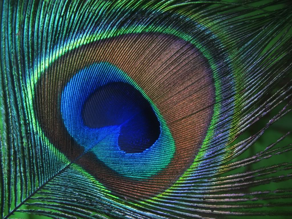 Feather Wallpapers HD Wallpapers Pictures Images Backgrounds 1024x768