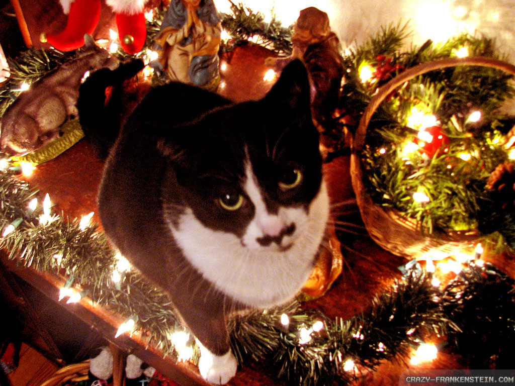 Free Download Christmas Black Kitten Wallpaper Images