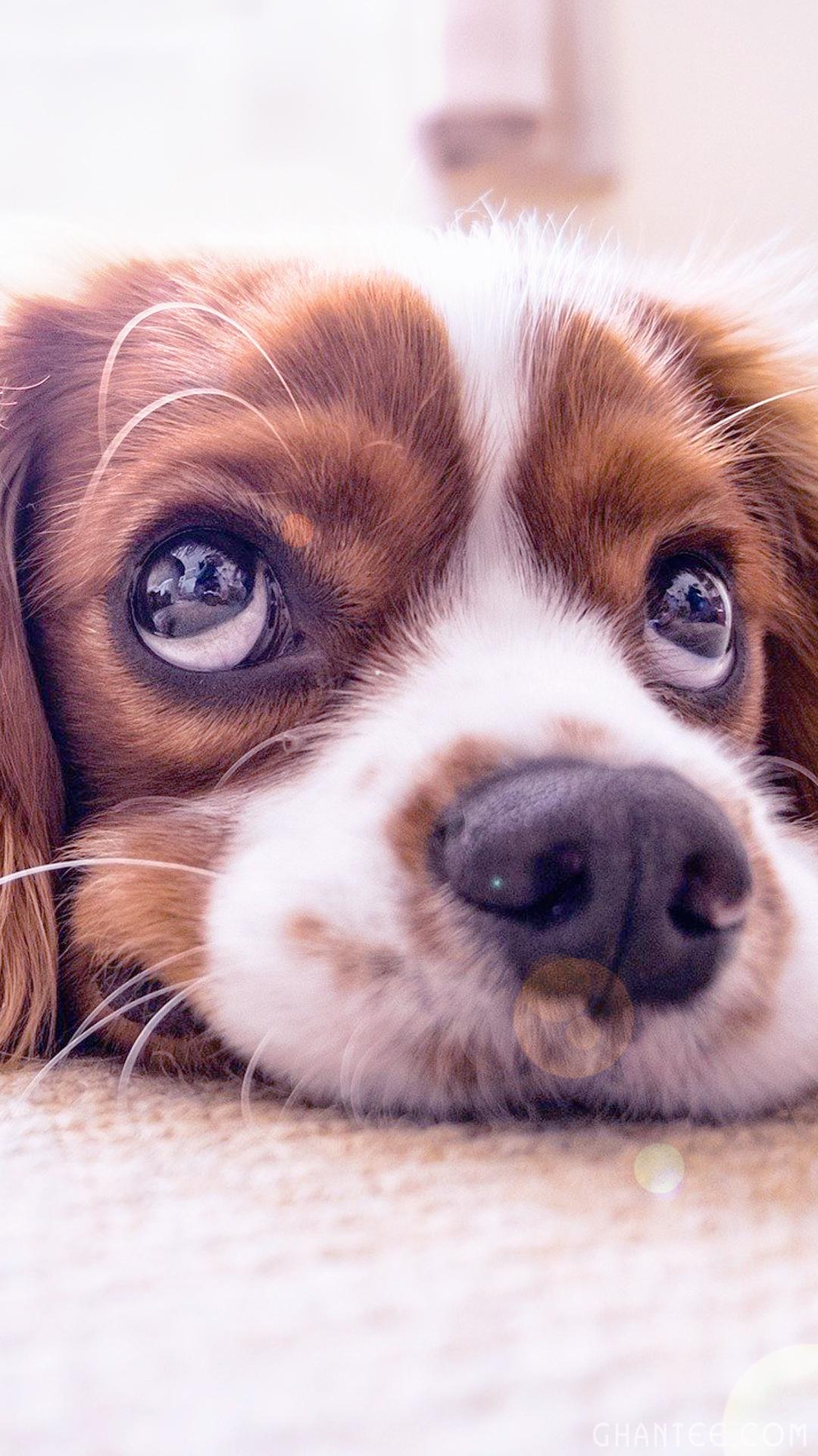 Cute Phone Backgrounds   Doggo Dog Language Meme   1080x1920 1080x1920