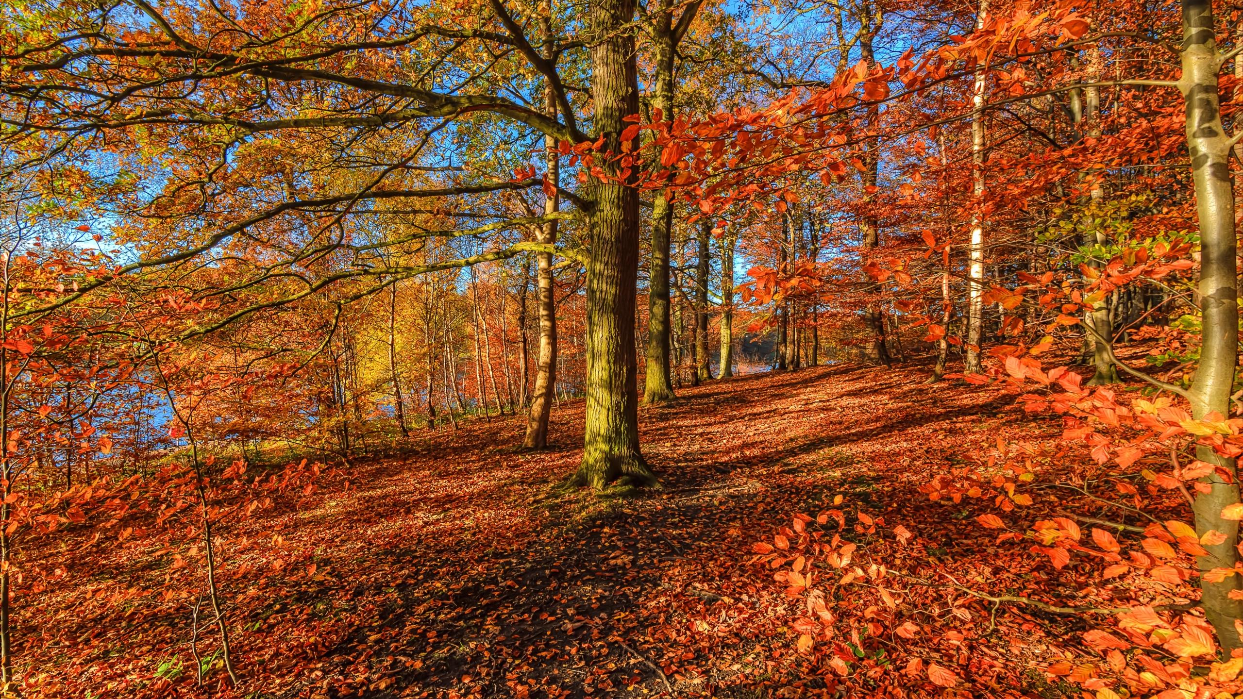 Autumn Wallpaper for Mac - WallpaperSafari