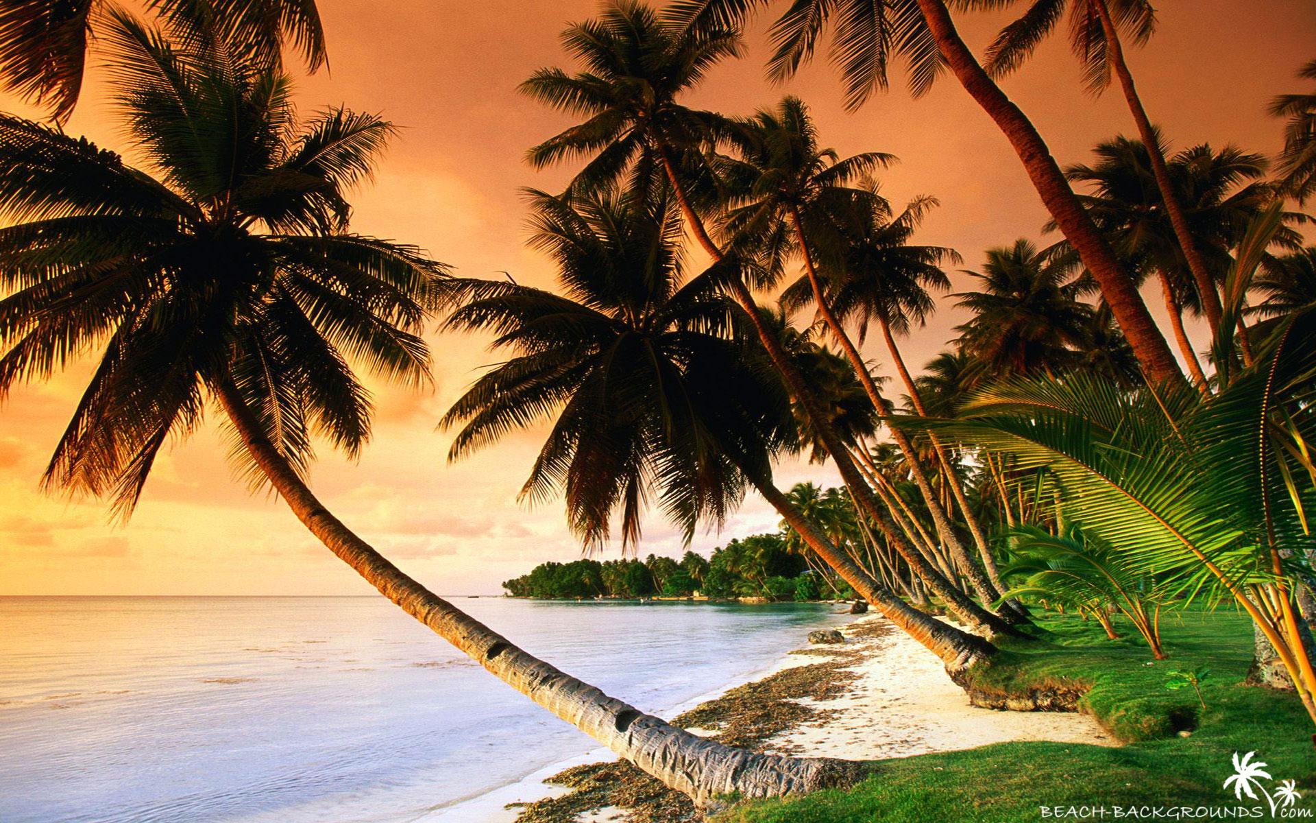 Free Download Beautiful Beach Palm Trees On Sunset Beach