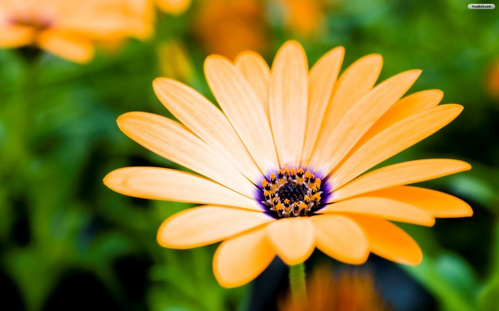 All photos gallery flower wallpaper flowers wallpaper 1600x1000