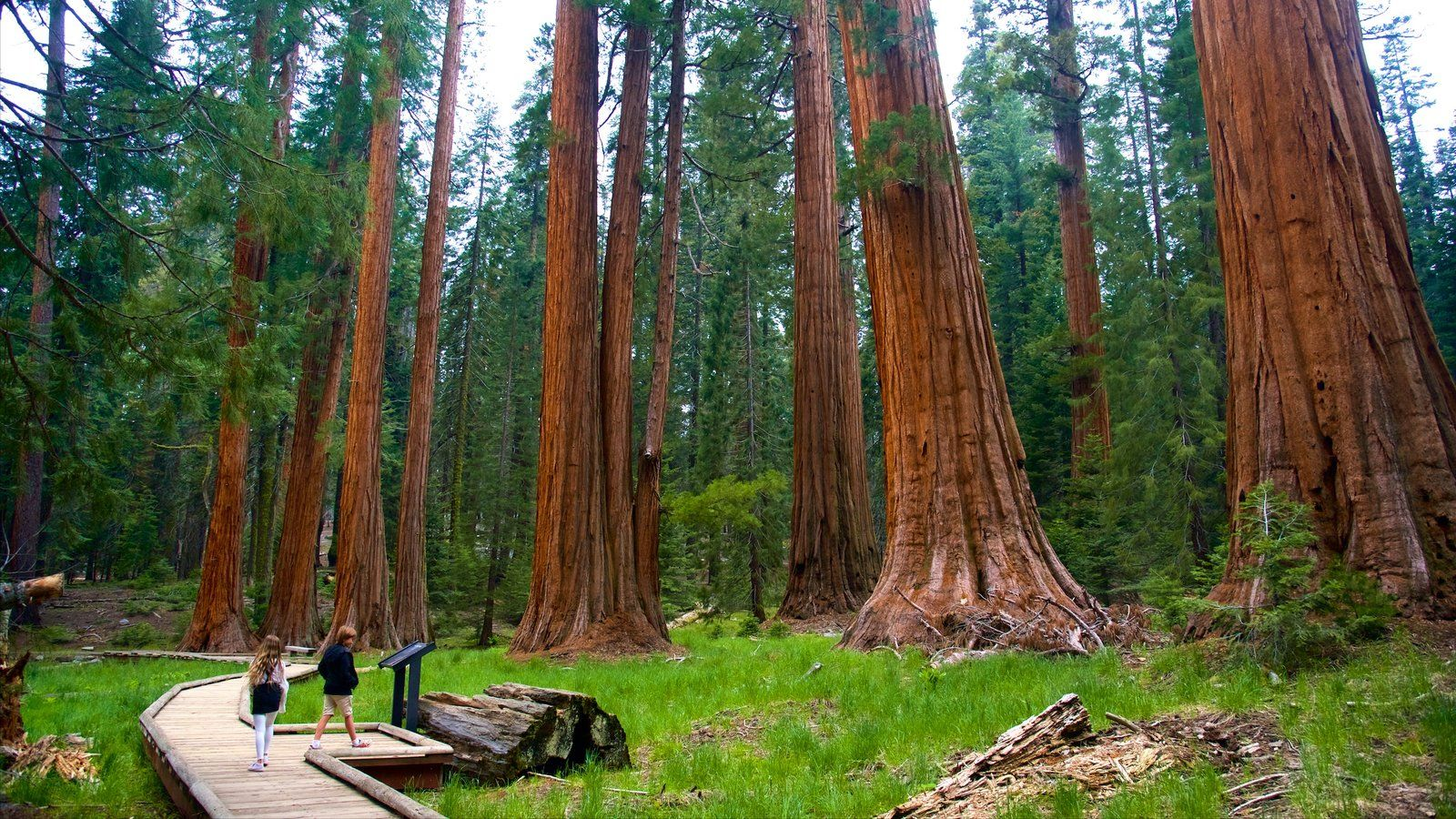 65 Giant Sequoia National Park Wallpapers   Download at WallpaperBro 1600x900
