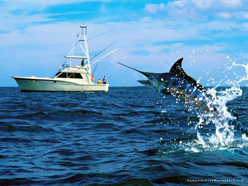 Aquacultura vs Pesca Tradicional 1024x768
