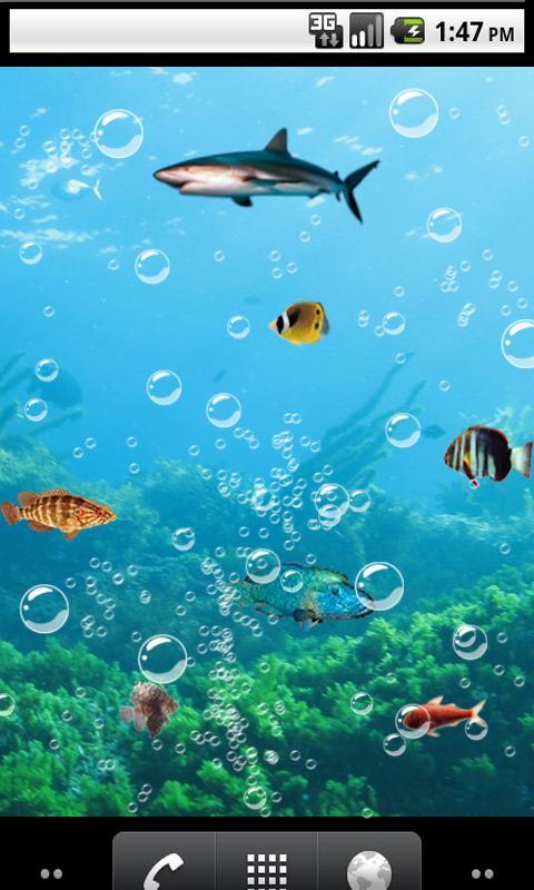 live fish wallpaper wallpapersafari