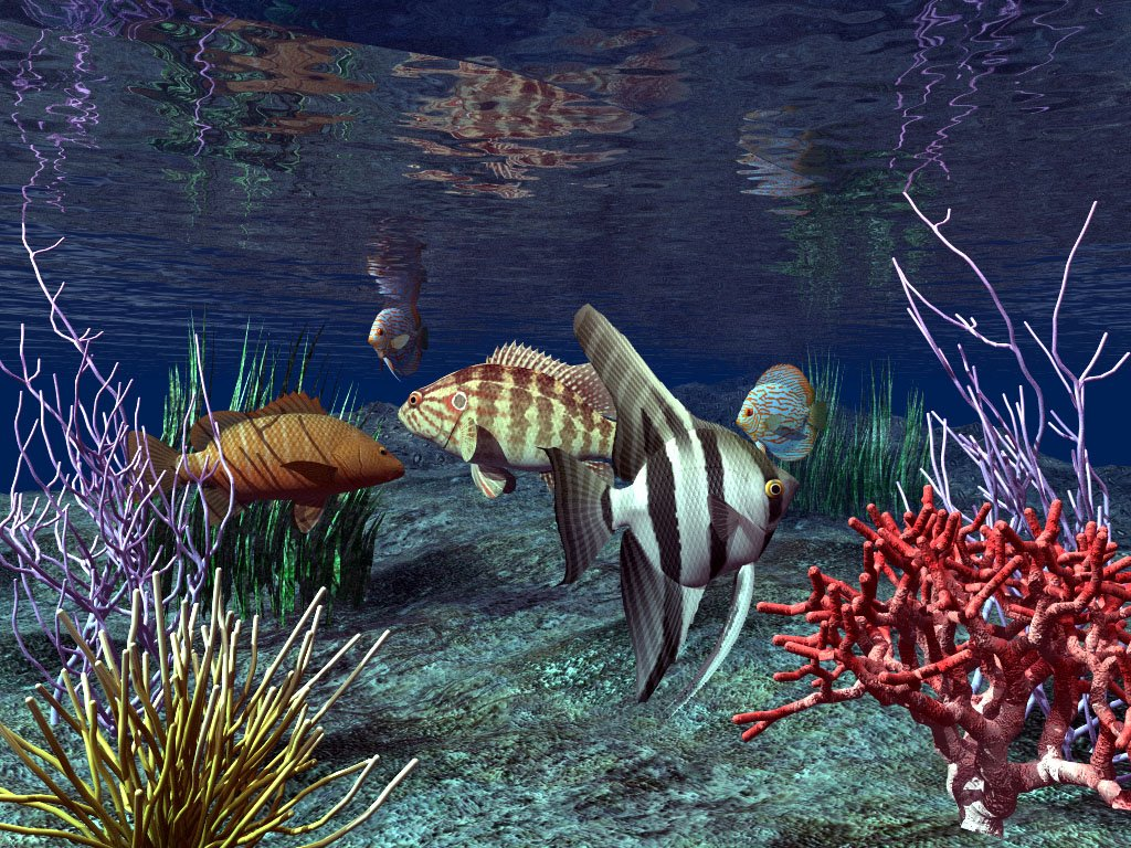 Real Wallpapers 3D Fish Wallpaper 1024x768