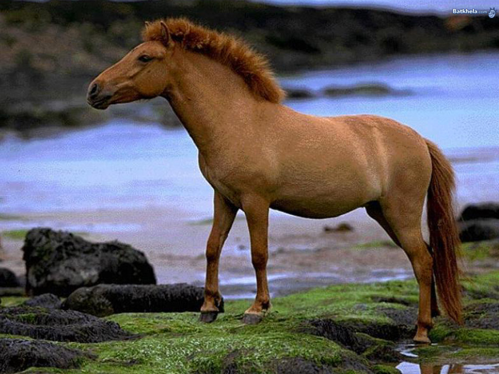 wild horses wallpapers 1024x768