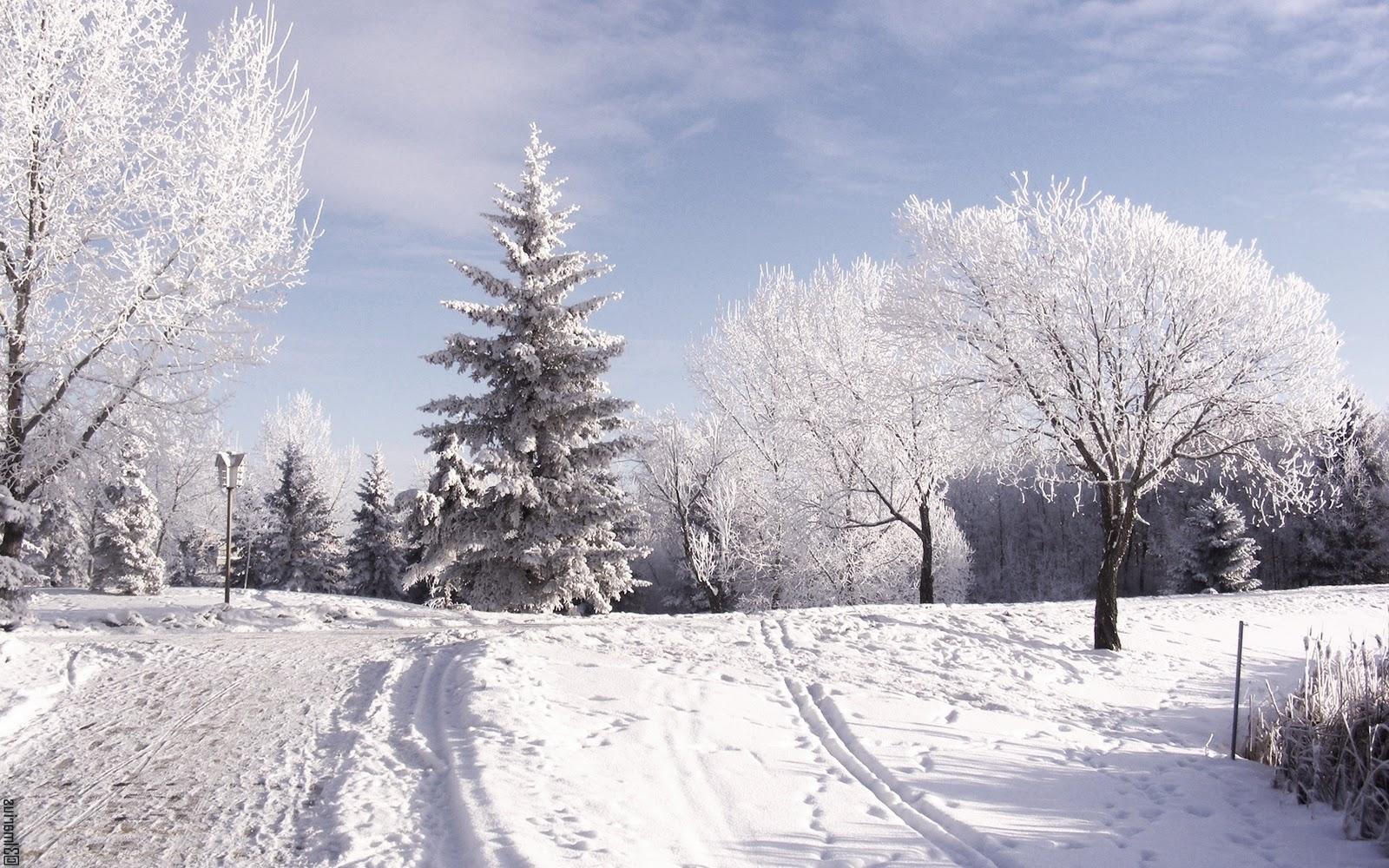 Pics Photos   Snow Background Desktop Wallpaper Wallpaper 1600x1000