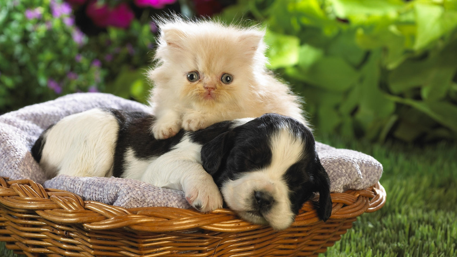 Collection Cats And Puppies Wallpaper