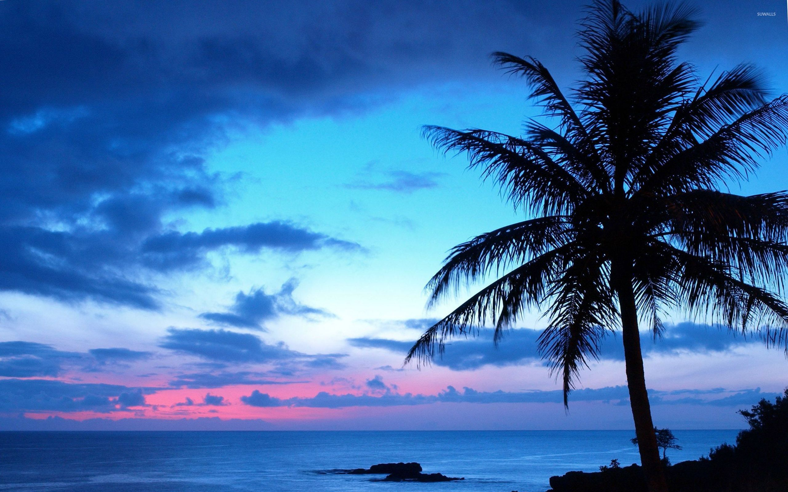 45 Pink Blue Sunset Beach Wallpapers   Download at WallpaperBro 2560x1600