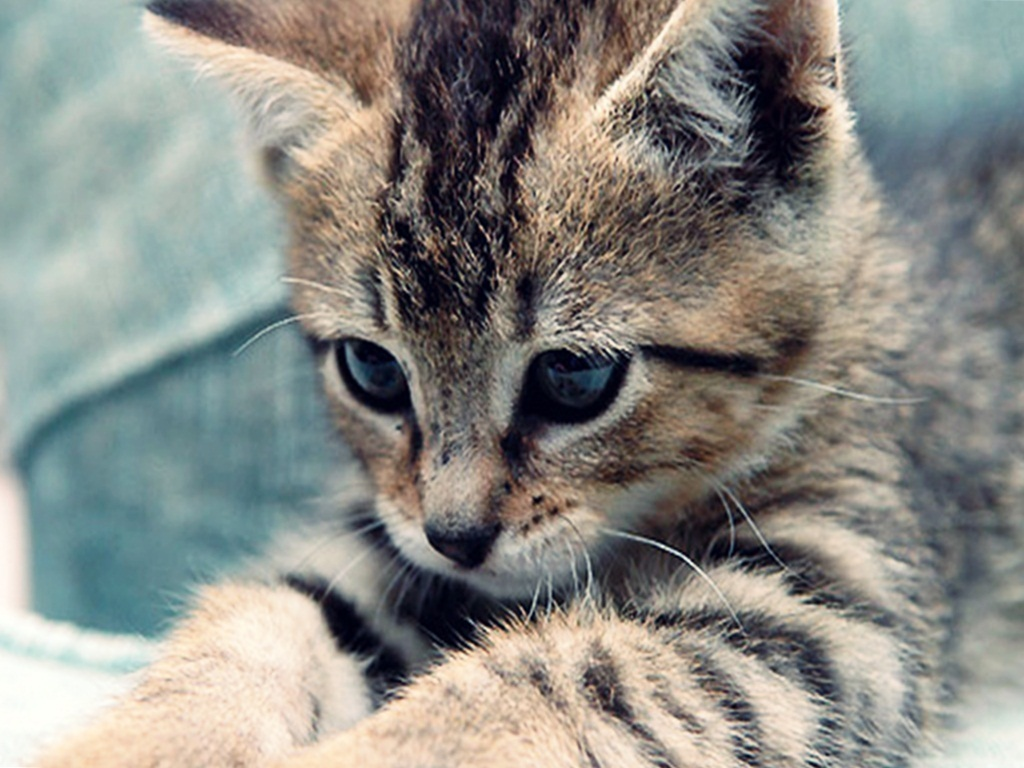 Cute Kittens images Cute kitten HD wallpaper and background photos 1024x768