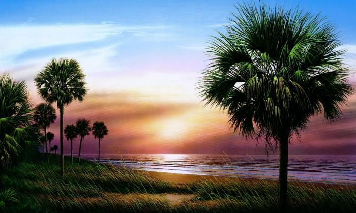 Tropical Ocean Scenes   Wallpaper Border Wallpaper inccom 700x419