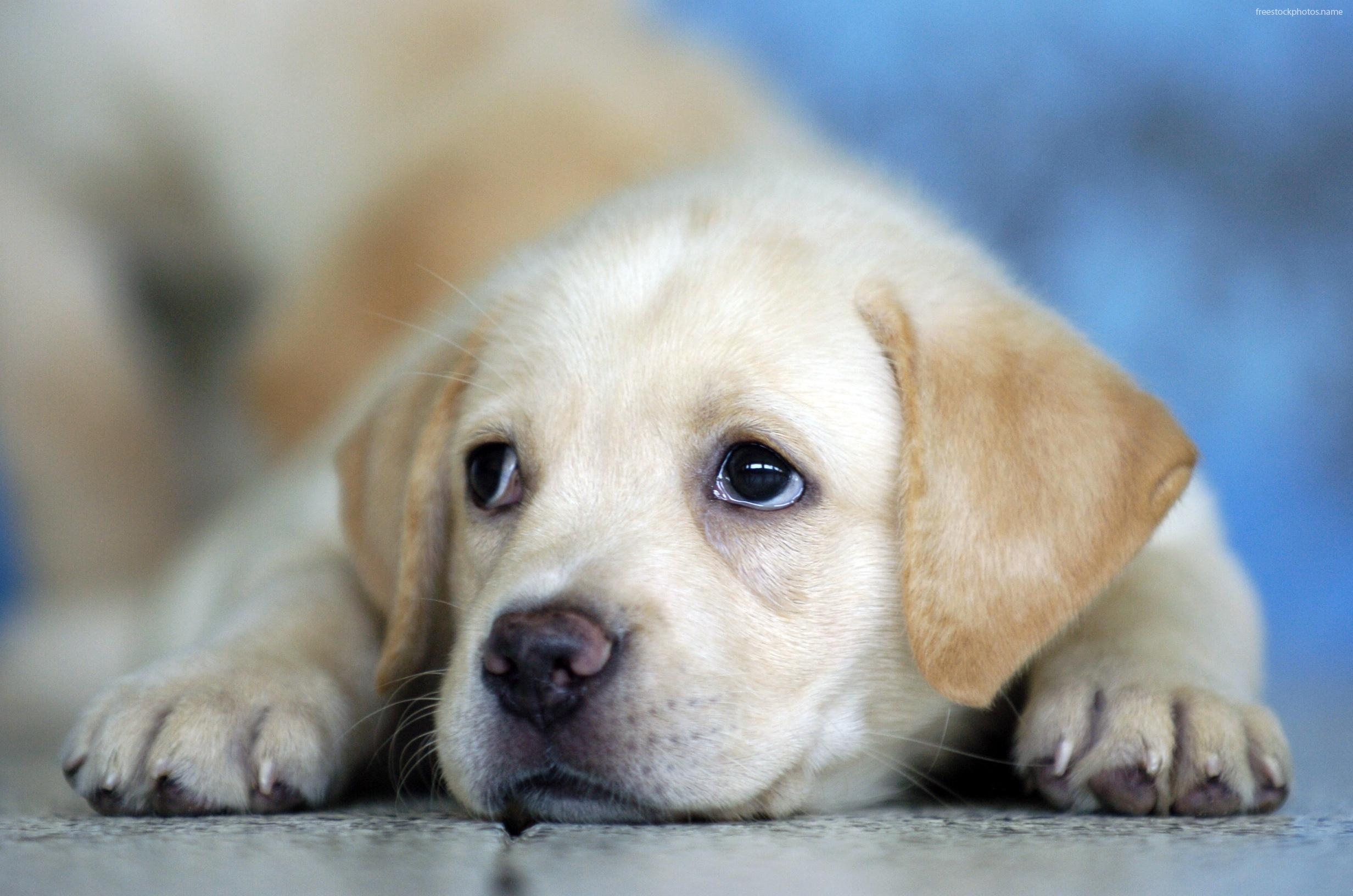 baby puppy wallpaper wallpapersafari