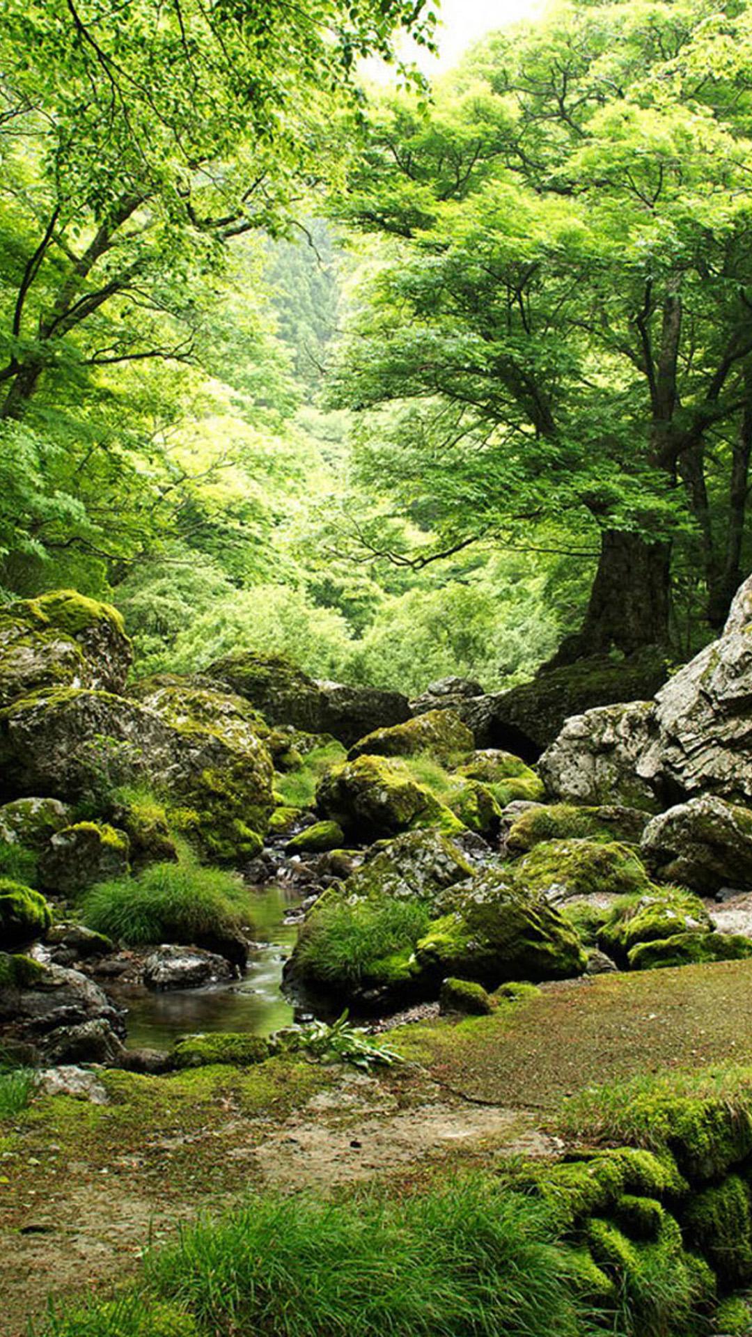49+ iPhone 6 Plus Wallpaper Nature on WallpaperSafari