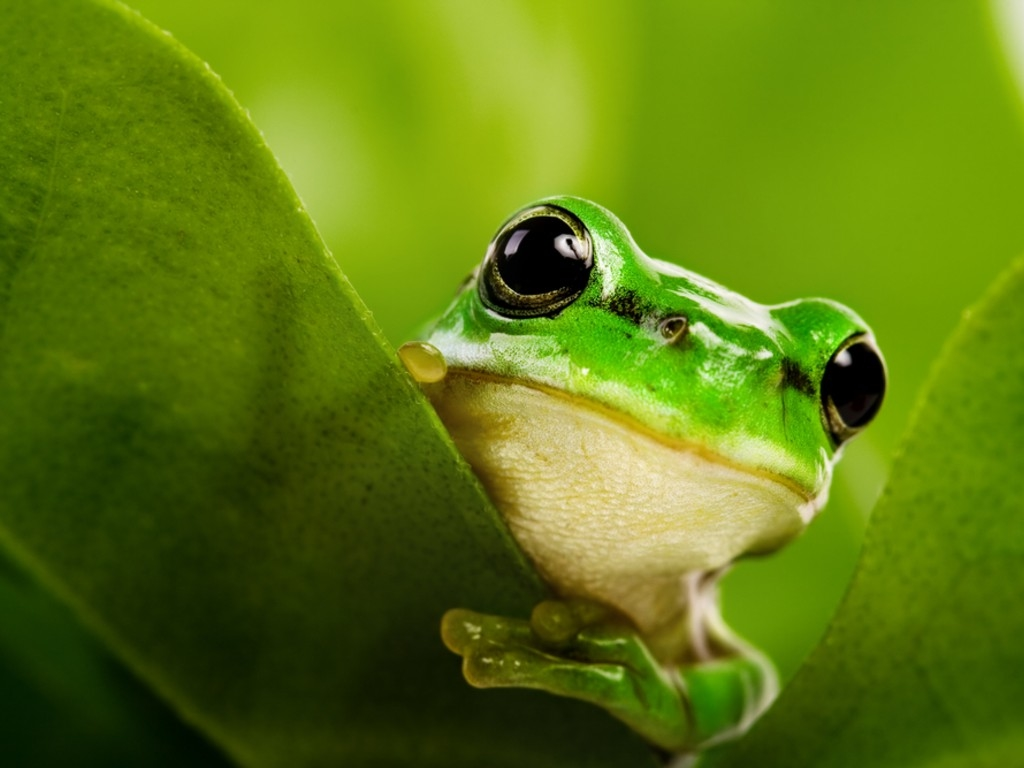 Cute Real Frog Wallpaper Download Wallpaper WallpaperMinecom 1024x768