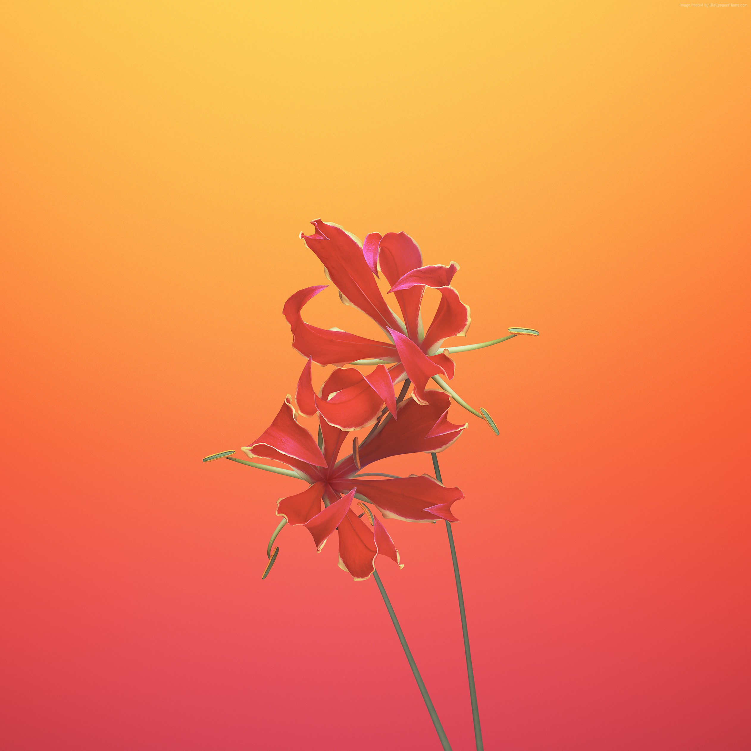 Wallpaper iPhone X wallpapers iPhone 8 iOS11 flower 2524x2524