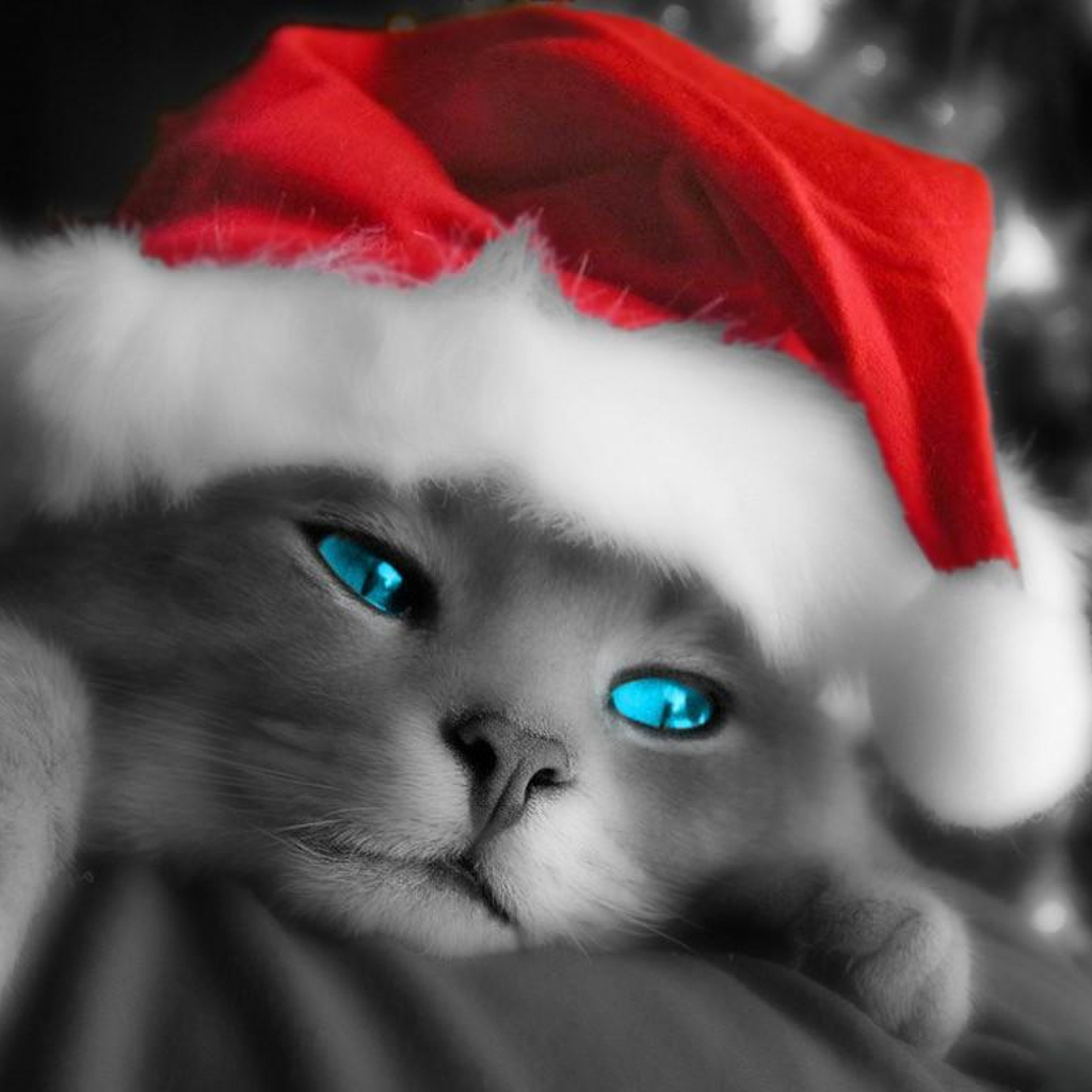 iPad Wallpapers Download Christmas Pets iPad Wallpapers 1024x1024