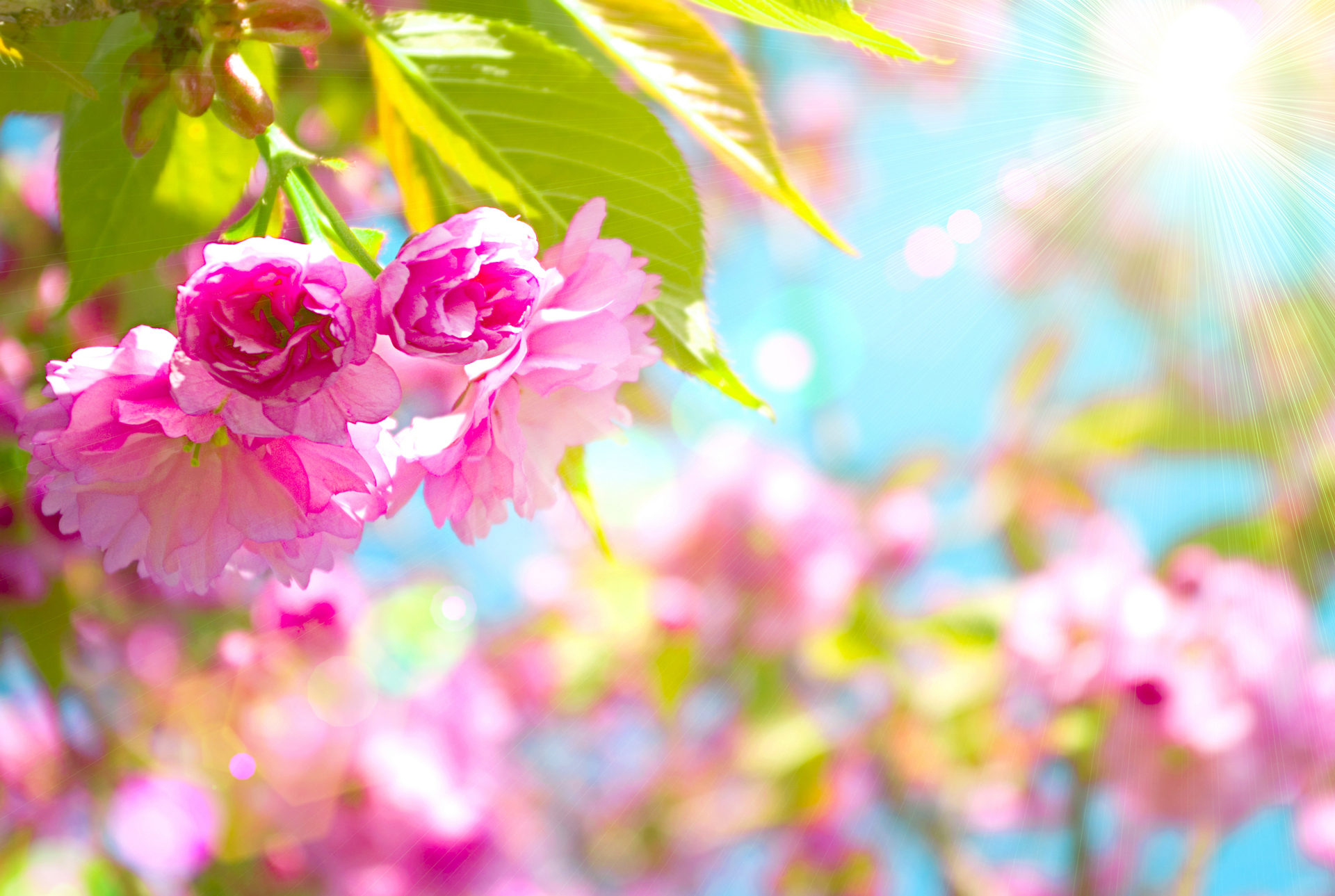 Spring Wallpapers HD download 1920x1289
