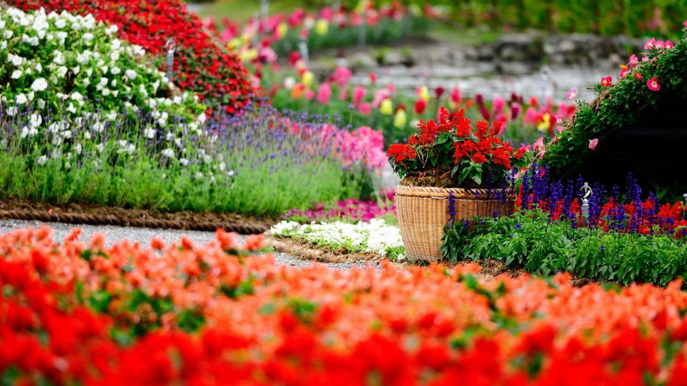 1366x768 Flower Garden Desktop PC And Mac Wallpaper