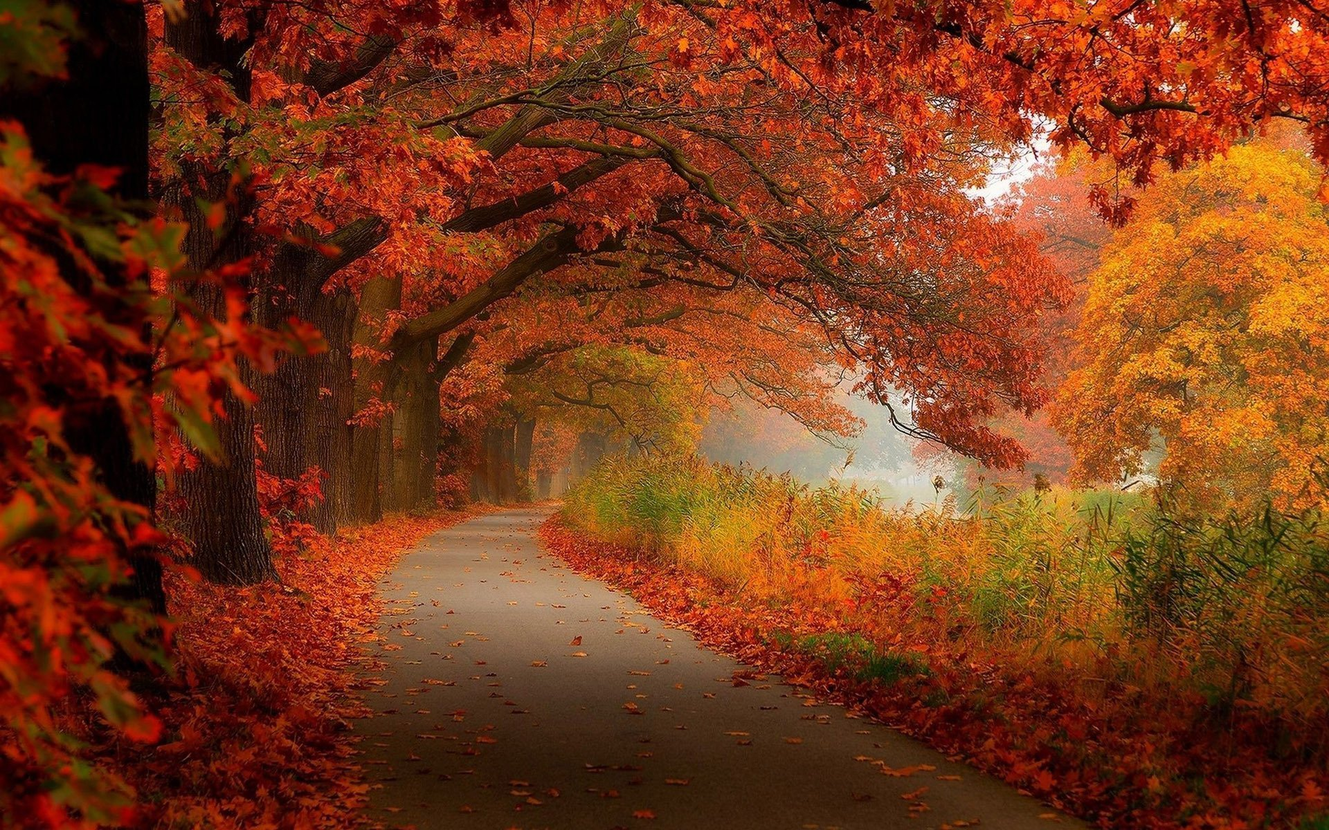 Free Download Download Fall Foliage Wallpapers 1920x1200 For Your Desktop Mobile Tablet Explore 77 Free Fall Foliage Wallpaper Free Halloween Wallpaper Free Thanksgiving Wallpaper Free Fall Wallpaper And Screensavers