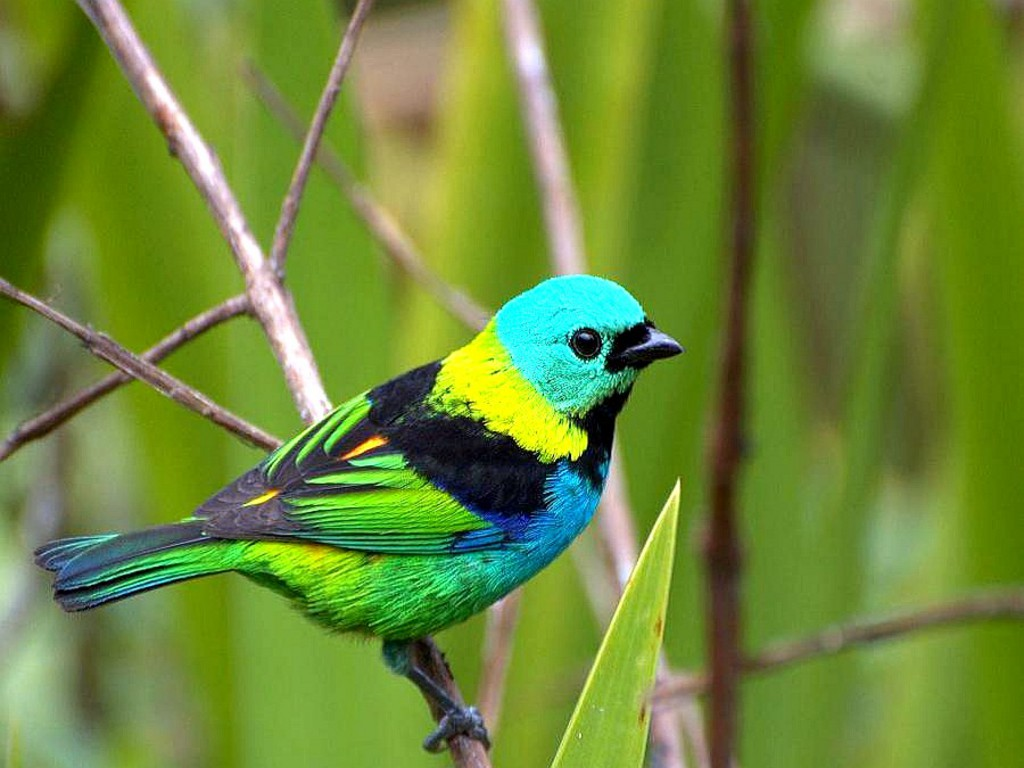 Images for colourful birds wallpaper 1024x768