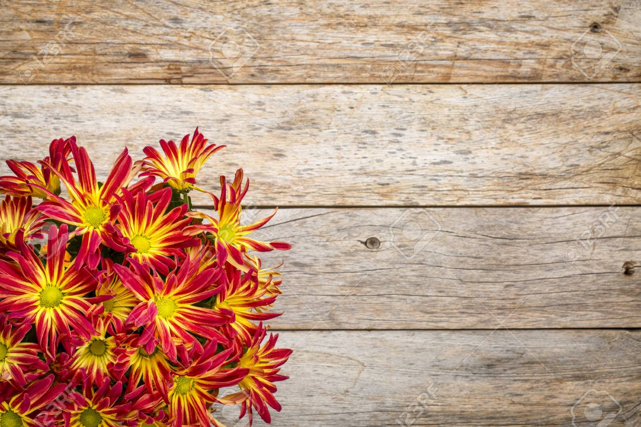Rustic Barn Wood Background With A Bouquet Of Fall Mums And Copy 1300x866