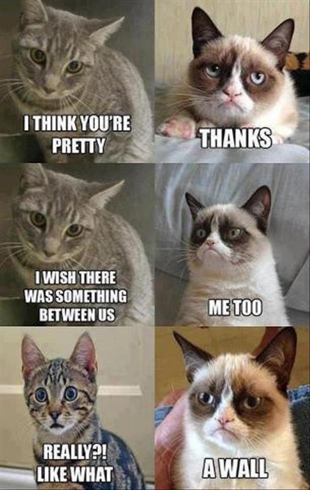 grumpy cat meme lol funny pictures jpg MEMEs 620x978