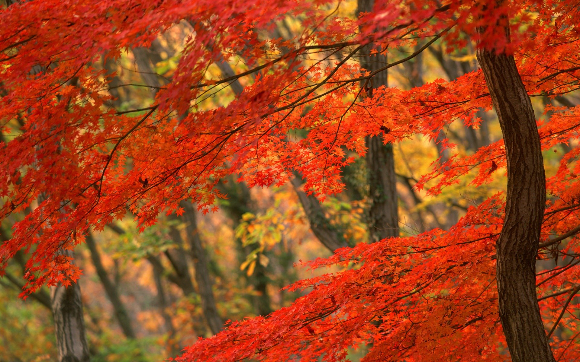 fall of autumn leaves desktop wallpaper fall of autumn leaves desktop
