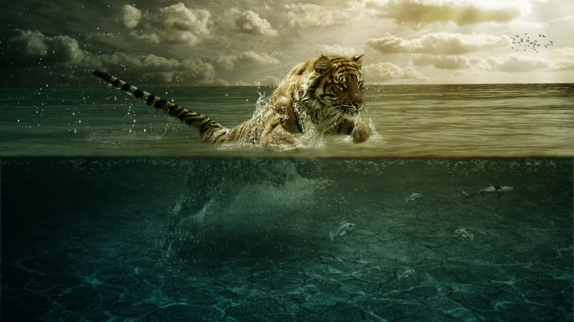 Tiger Wallpapers Desktop Background Animals Wallpapers Tiger 1920x1080