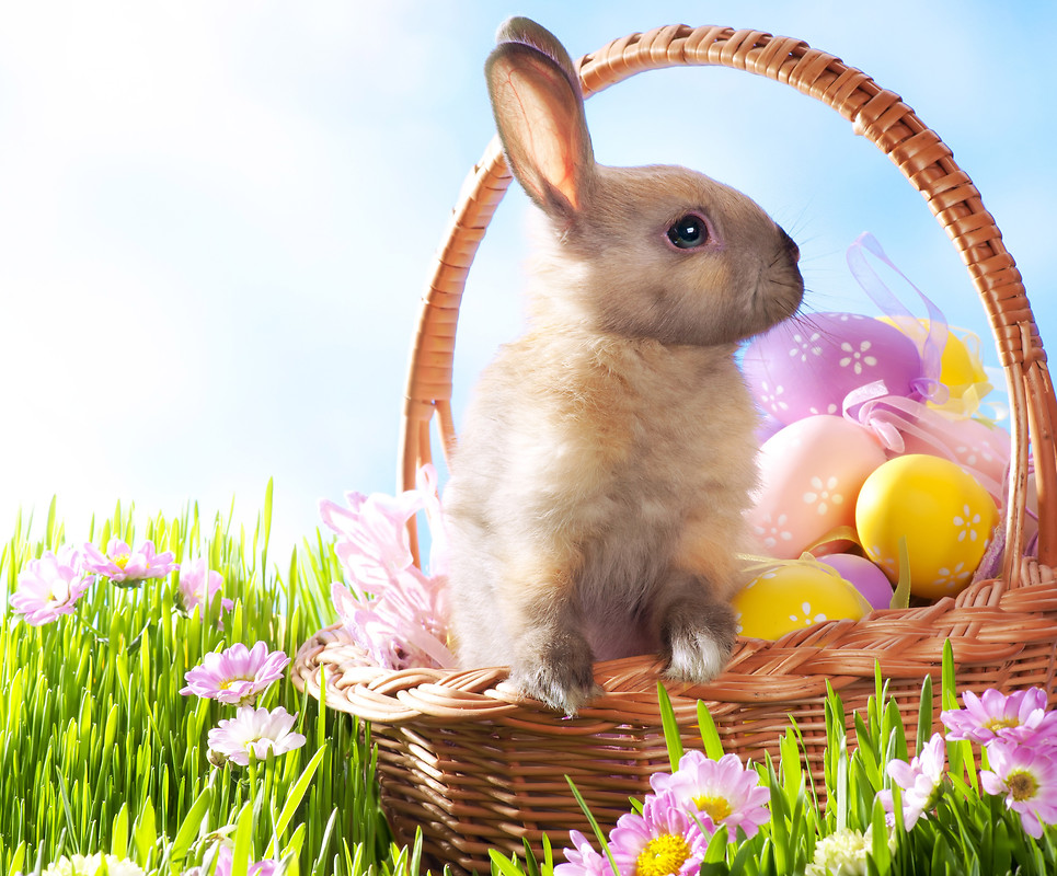 Free Download Wallpaper Download Download Easter Bunny Hd