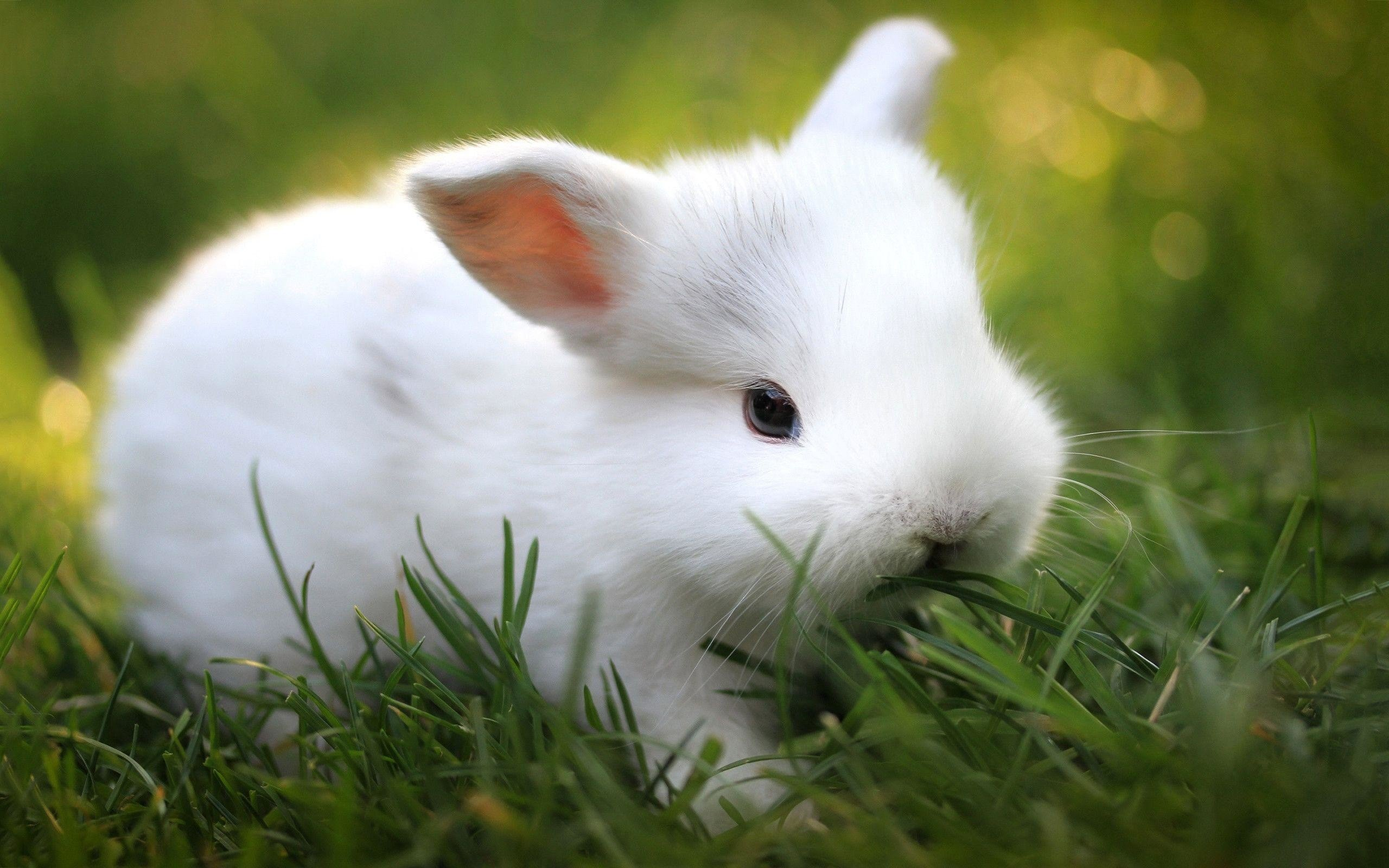 64 Bunnies Wallpapers on WallpaperPlay 2560x1600