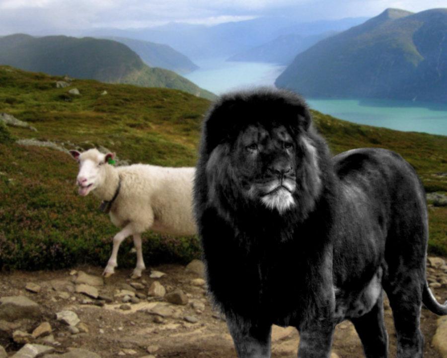 Free Download Unusual Wallpaper Black Lion Wallpapers