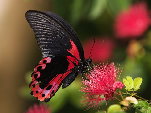 HD Wallpapers PC wallpapers Nature wallpapers HD butterfly 640x480