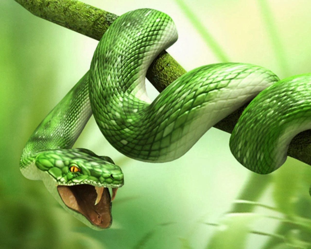 3D Animal Snake HD Wallpapers Snake wallpaper Animal 1280x1024