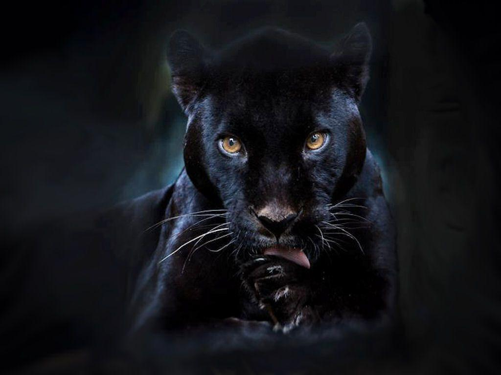 Black Panther Backgrounds 1024x768