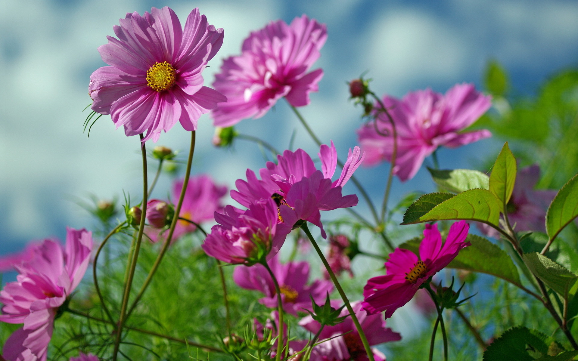 Summer Flowers Beauty 1920 x 1200 Download Close 1920x1200