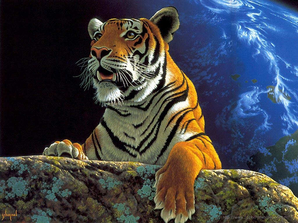 Tiger Wallpaper Free Download Hd