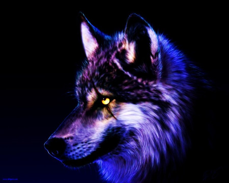 cool wolf background wallpapers 900x720