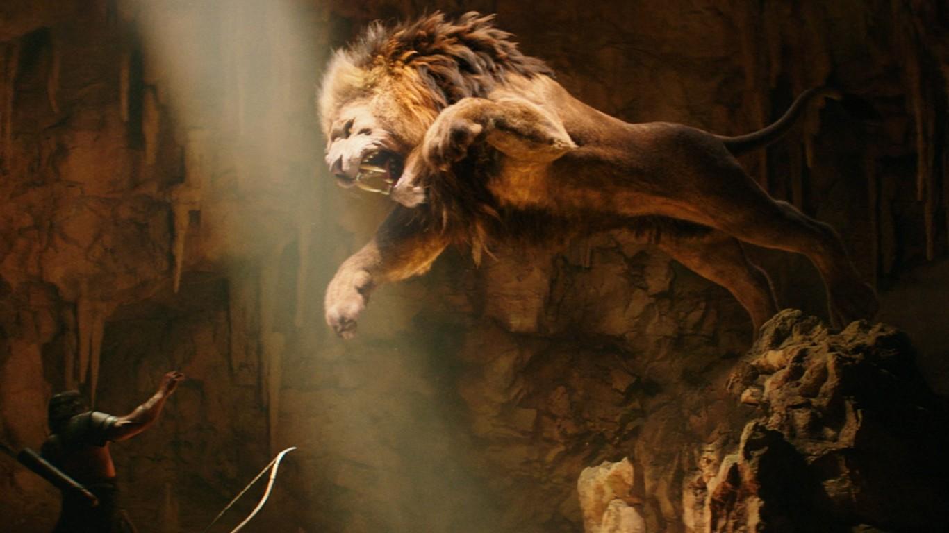 hd Lion Wallpapers 1080p Lion Fight hd Wallpaper 1366x768