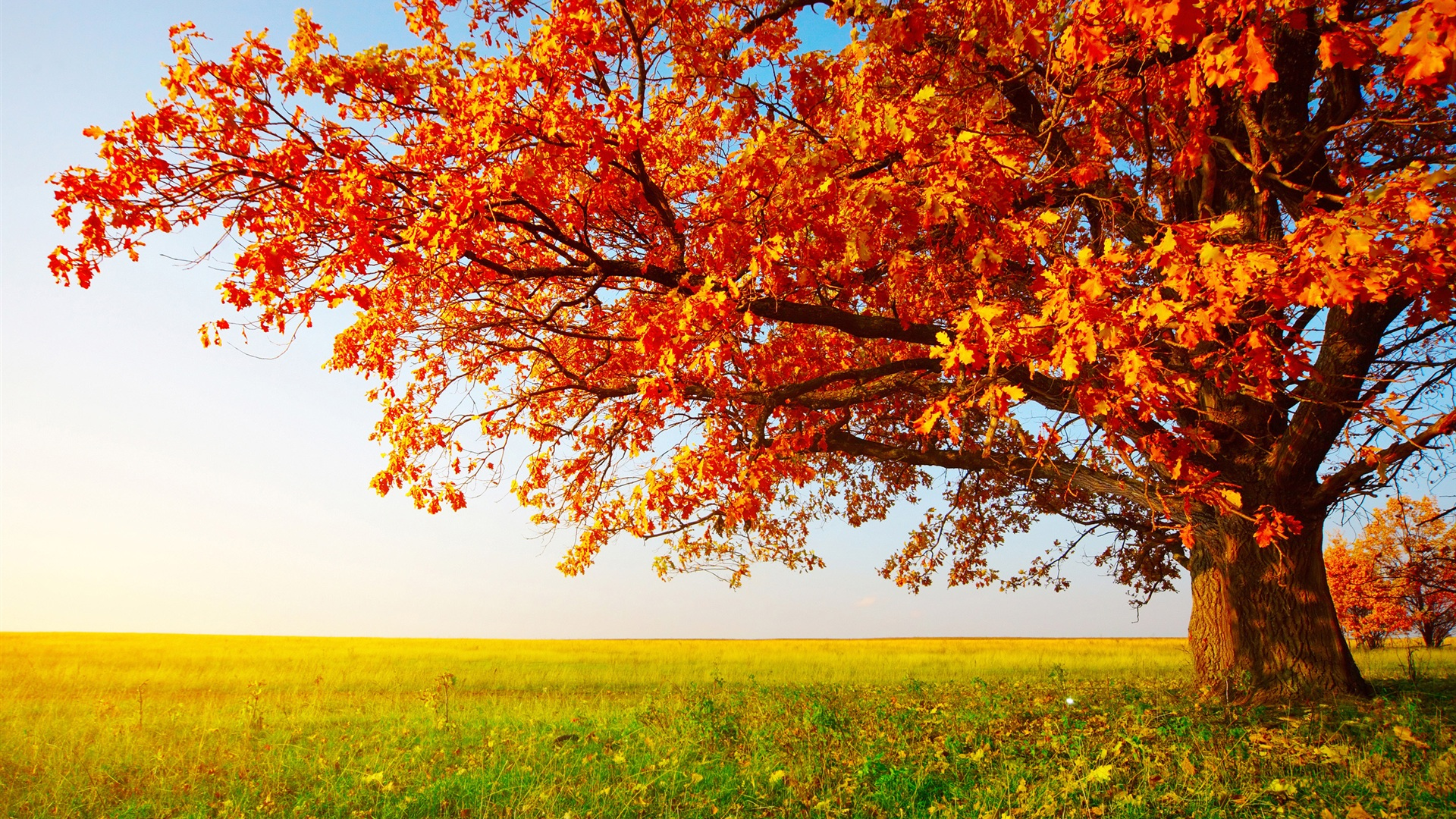 40 Autumn Wallpaper Backgrounds For HD Download 1920x1080