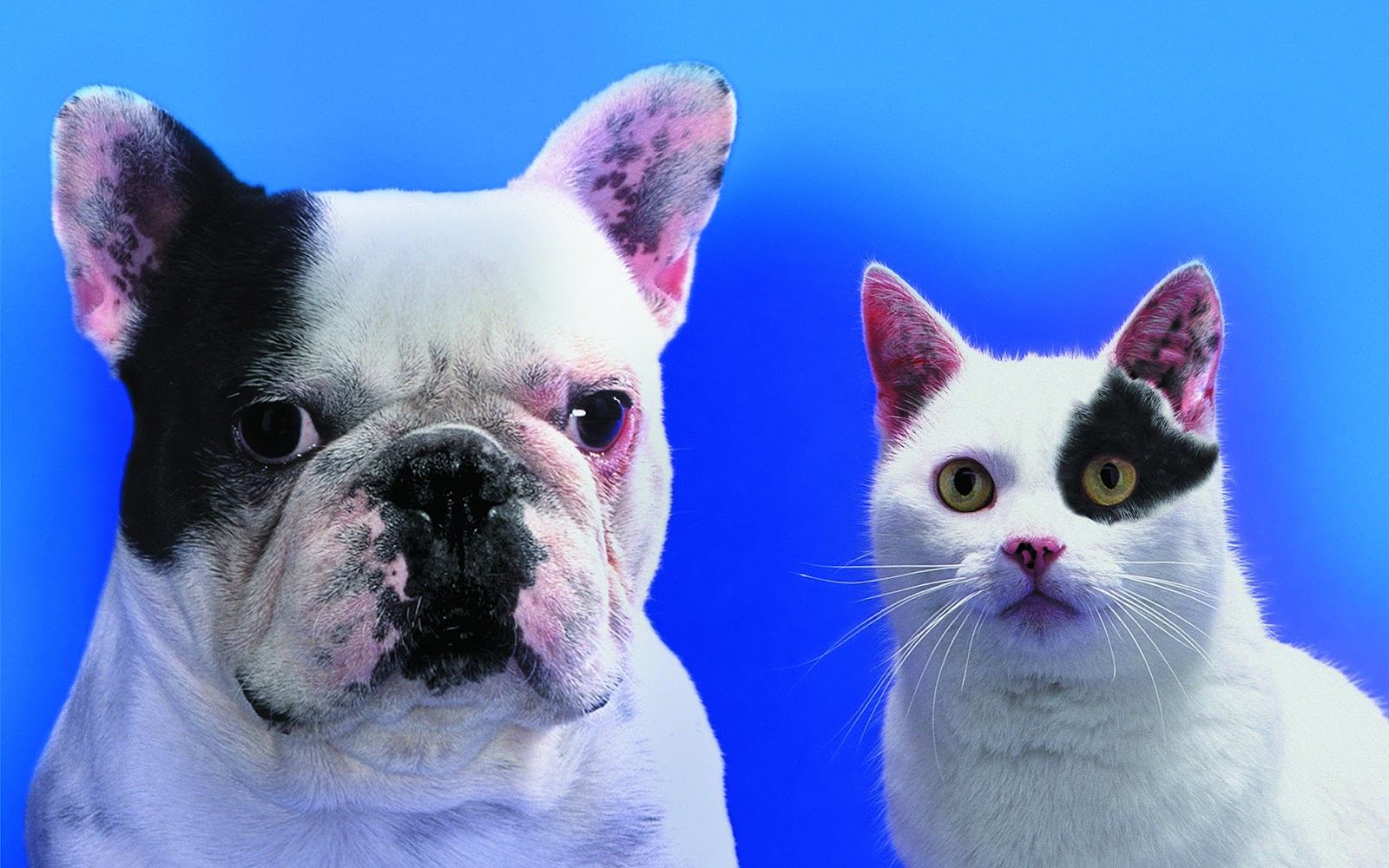 Wallpaper Collections Funny Cats Dogs Wallpapers 1600x1000
