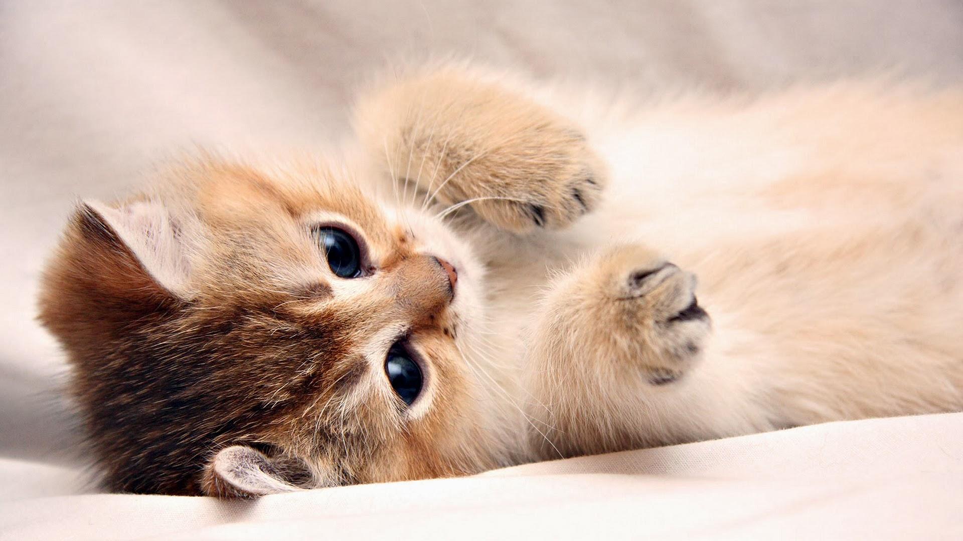 Cute Cat Wallpaper Cute Kitten Cat Hd Wallpaper 1920×1080 ...