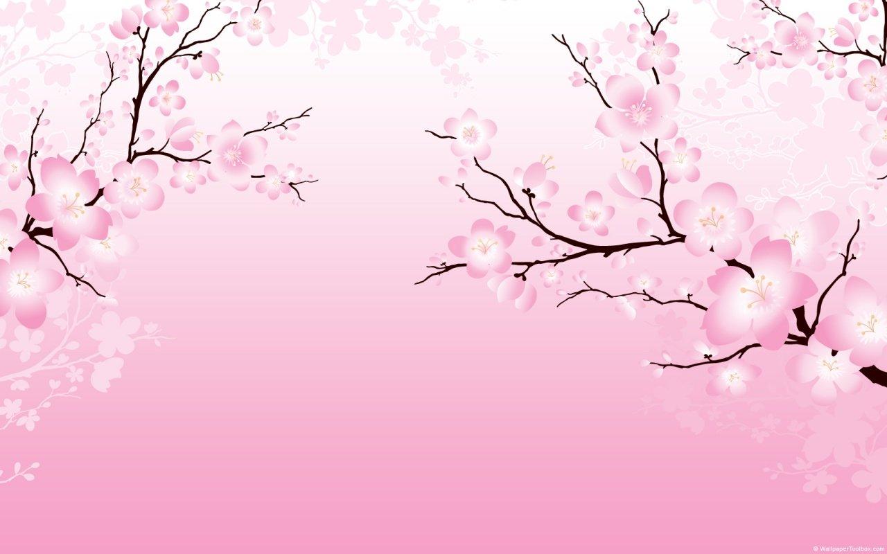 Cherry blossom branch X 1280x800