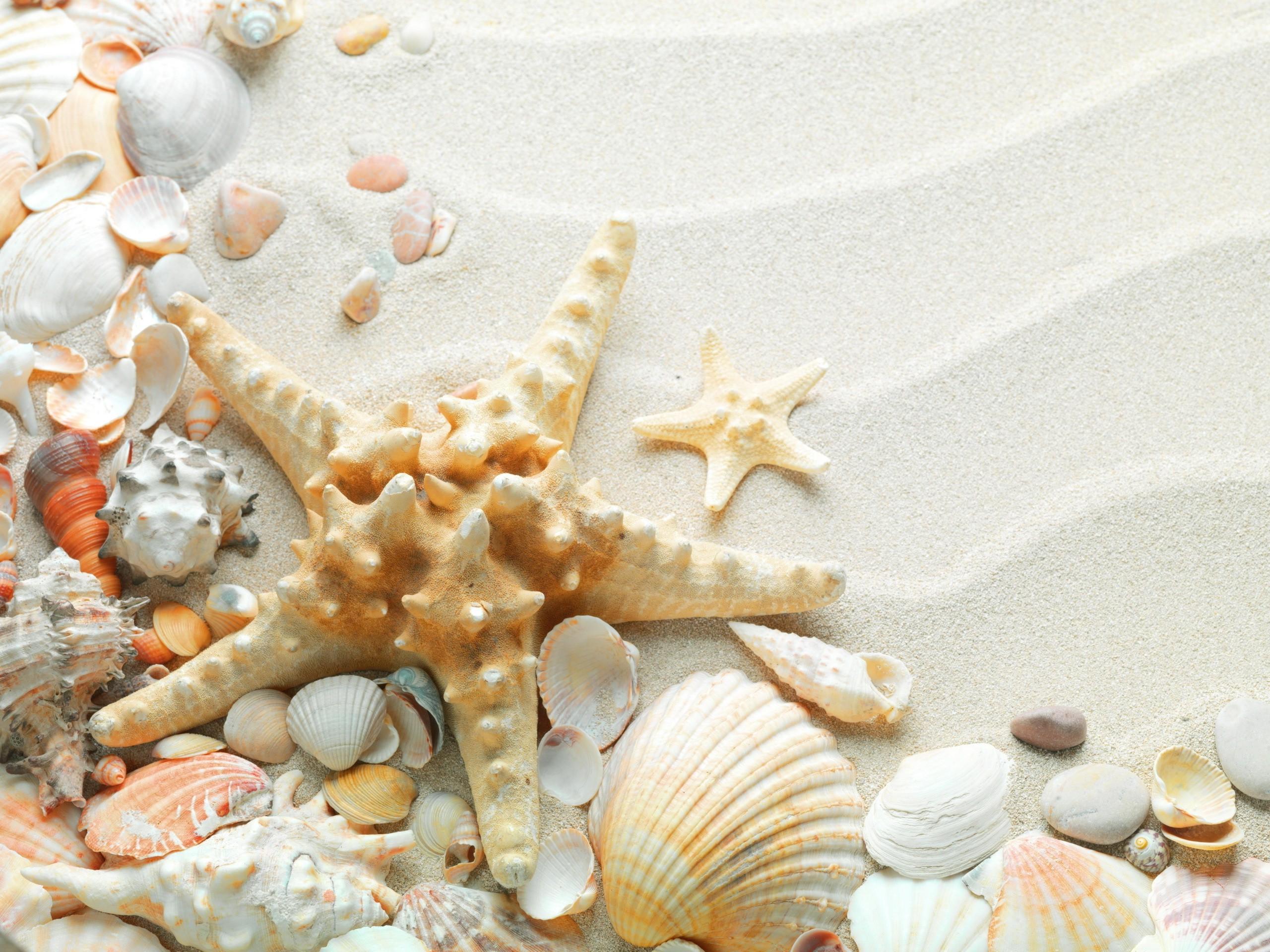 Sand Starfish Seashells White Sand HD Background Wallpaper 2560x1920