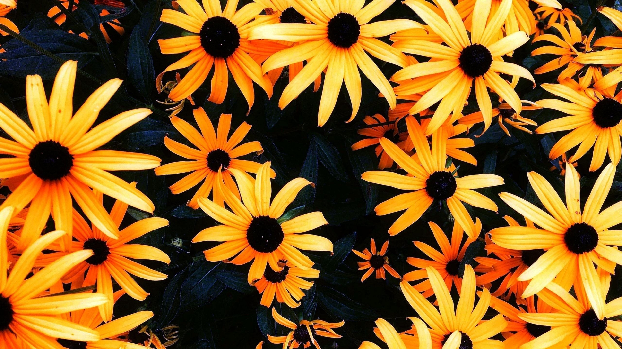 Sunflower Wallpapers For Chromebook   Sunflower Wallpapers For 2560x1440
